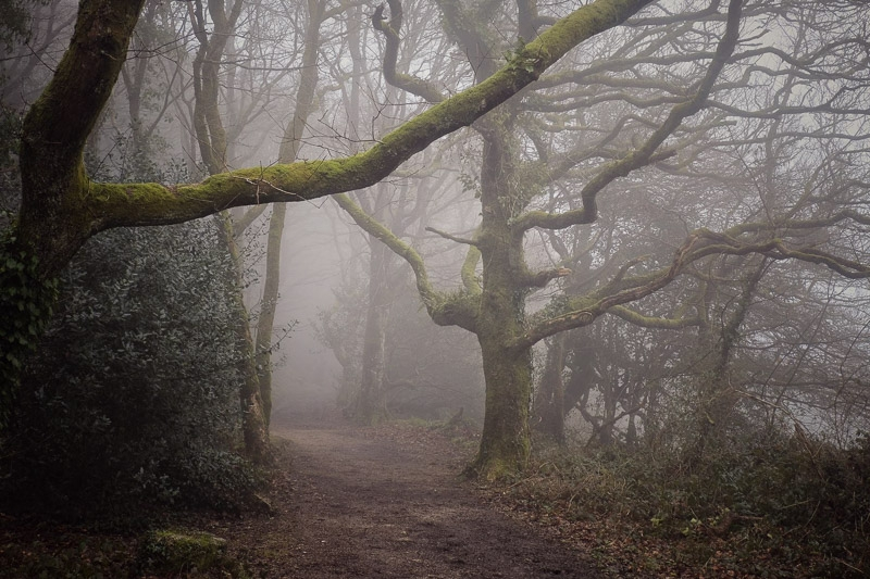 Luxulyan Valley Mist photographed by Peter Hicks