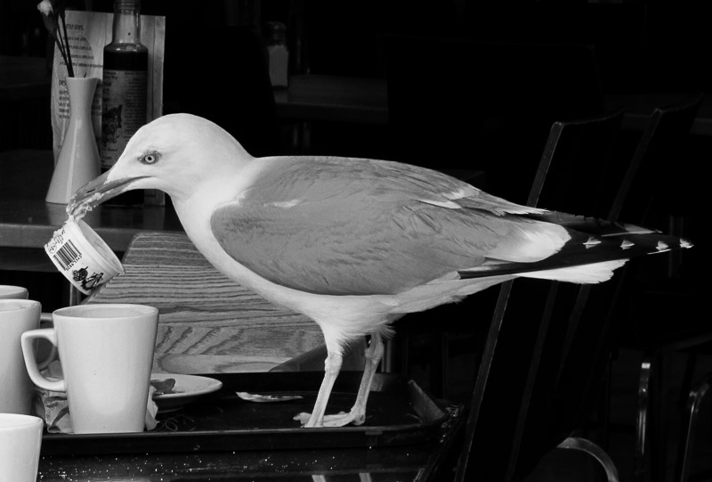 Commended - Seagull photographed by Rose Cross